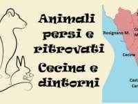 animali persi